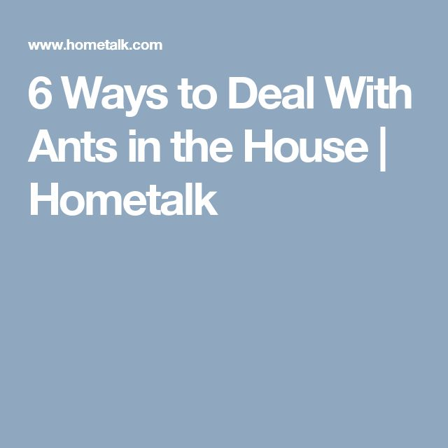 6 Ways to Deal With Ants in the House | Hometalk