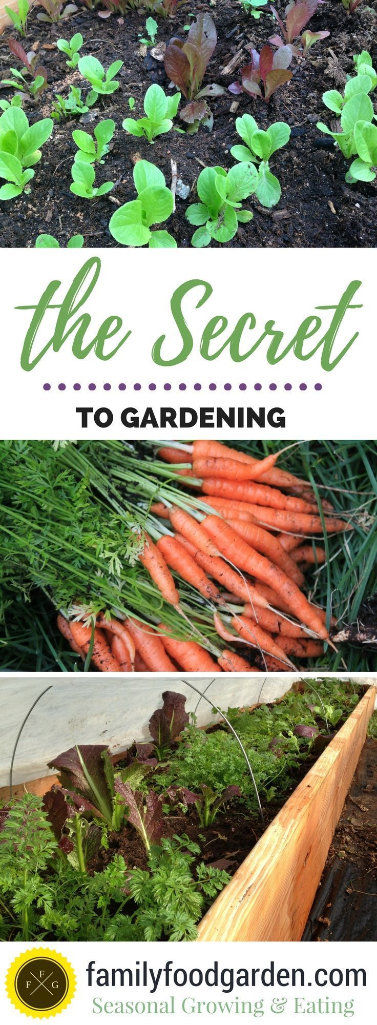 Find out what makes a succesful gardener