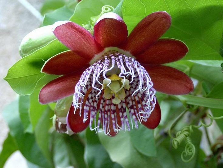 Открытка пасхе, необыкновенные цветы картинки