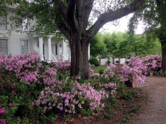 A Special Plantation Garden in Georgia   Fine Gardening