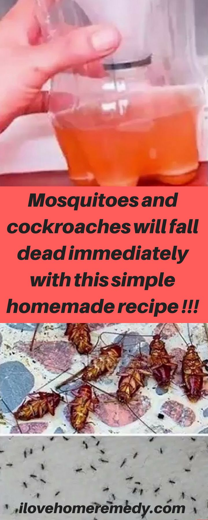 Mosquitoes and cockroaches will fall dead immediately with this simple homemade recipe !!!