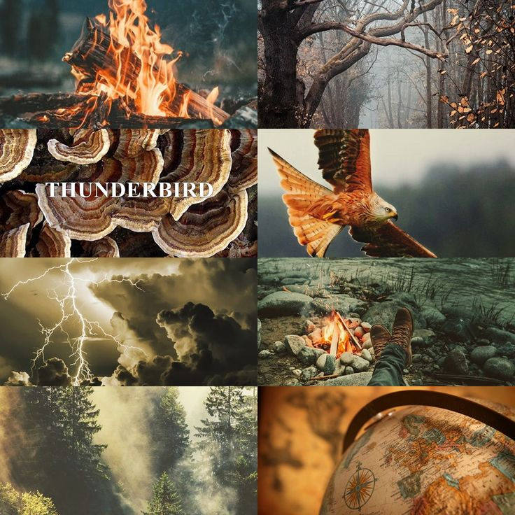 THUNDERBIRD - Represents the soul. Favours adventurers | thunderbird - ilvermorny - fantastic beasts - aesthetic - harry potter