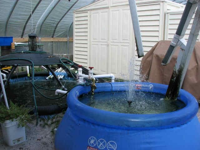 Diy fish farm aquaponics hydroponics pinterest the for Garden pool tilapia