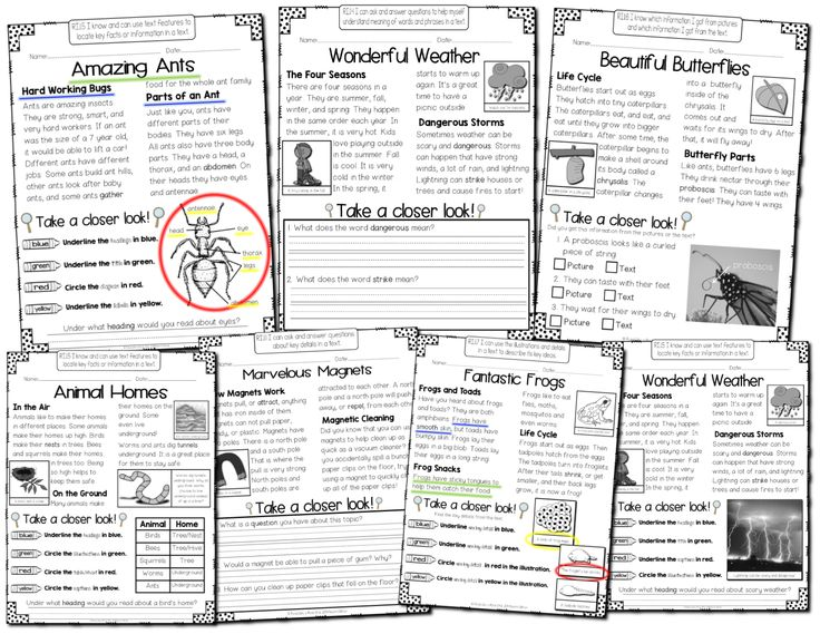 Take a Closer Look: Nonfiction Close Reading for First