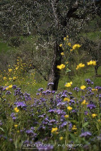"""Natura a La Maliosa """"La Maliosa, il luogo della quiete"""" di Lorenzo Corino #organicfarm #biodynamic"""