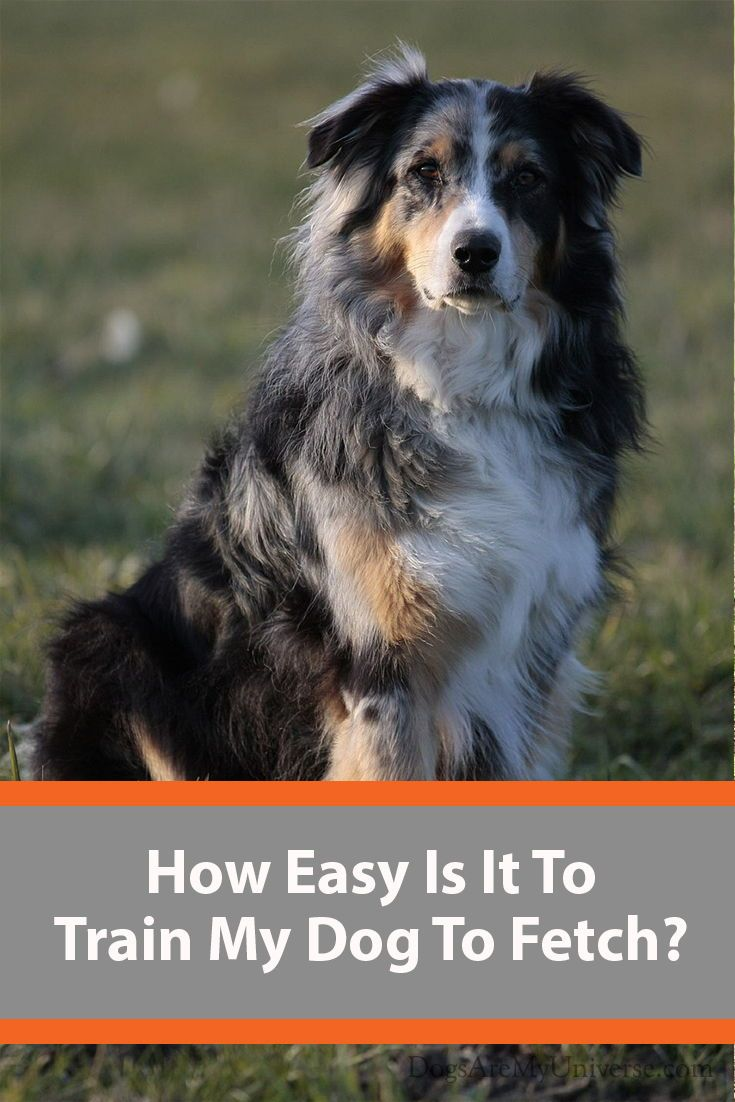 How Easy Is It To Train My Dog To Fetch Dogs Dog Activities