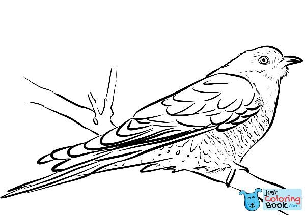 Cuckoo Sitting On The Branch Coloring Page Free Printable Coloring