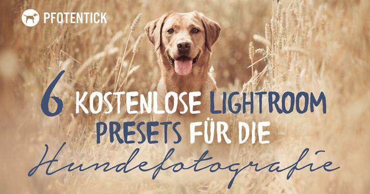 Ein Set mit 6 Lightroom Presets für die Hundefotografie zum kostenlosen Download.