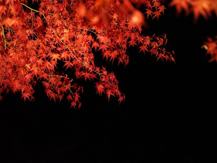 red leaves at night by nob1228 on 500px