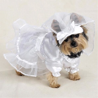 Casual Canine Dogs Wedding Dress With Veil