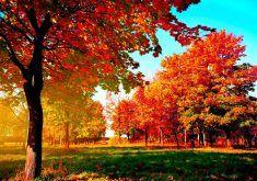autumn desktop wallpapers 1gd