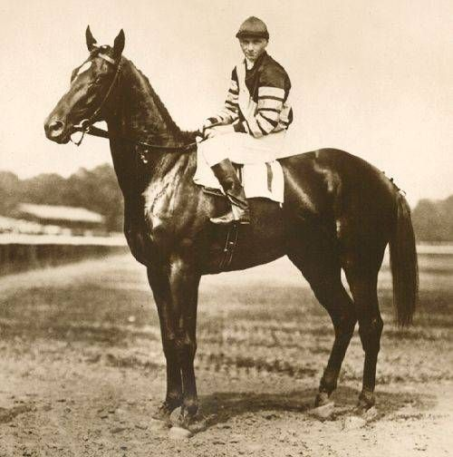 """Gallant Fox;1930 Triple Crown Winner  """"Since the retirement of Man o' War no horse has captured the imagination of the American public as has Gallant Fox. After a relatively light campaign as a two-year-old, he swept like a meteor across the racing sky of 1930 and when he was retired for all times after his bloodless triumph in the Jockey Club Gold Cup he was more than a racehorse -he was an institution."""" Brood Horse Magazine"""