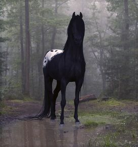 My dream horse in Hollow Woods!
