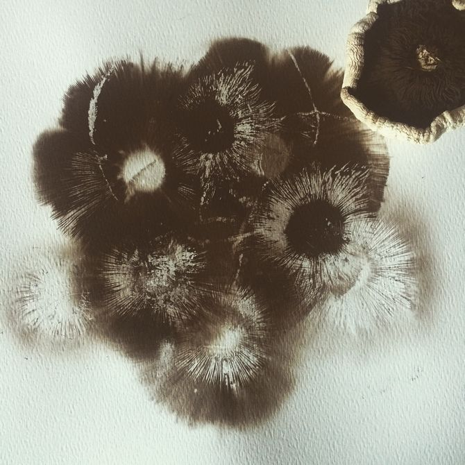 How to Make a Mushroom Spore Print: 5 Steps (with Pictures)