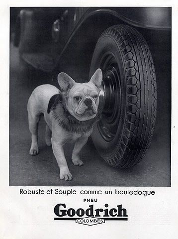 Frenchie in a Badger Dog Collar, Goodrich Tire Ad