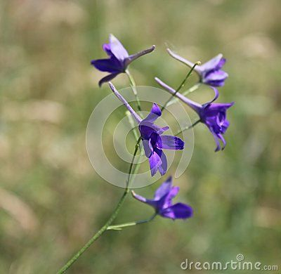 A beautiful blue flower on a field