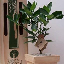 Gift Trees : enduring  eco. growing gift