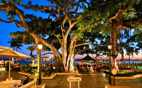 The banyan tree's exact age is unknown but it's over 150 years old and 150 feet wide. - The Banyan Courtyard at the Moana Surfrider on Oahu