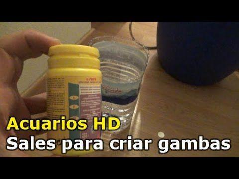 """ACUARIOS HD : GAMBAS NEOCARIDINAS """" EL SECRETO DEL EXITO """" - YouTube"""