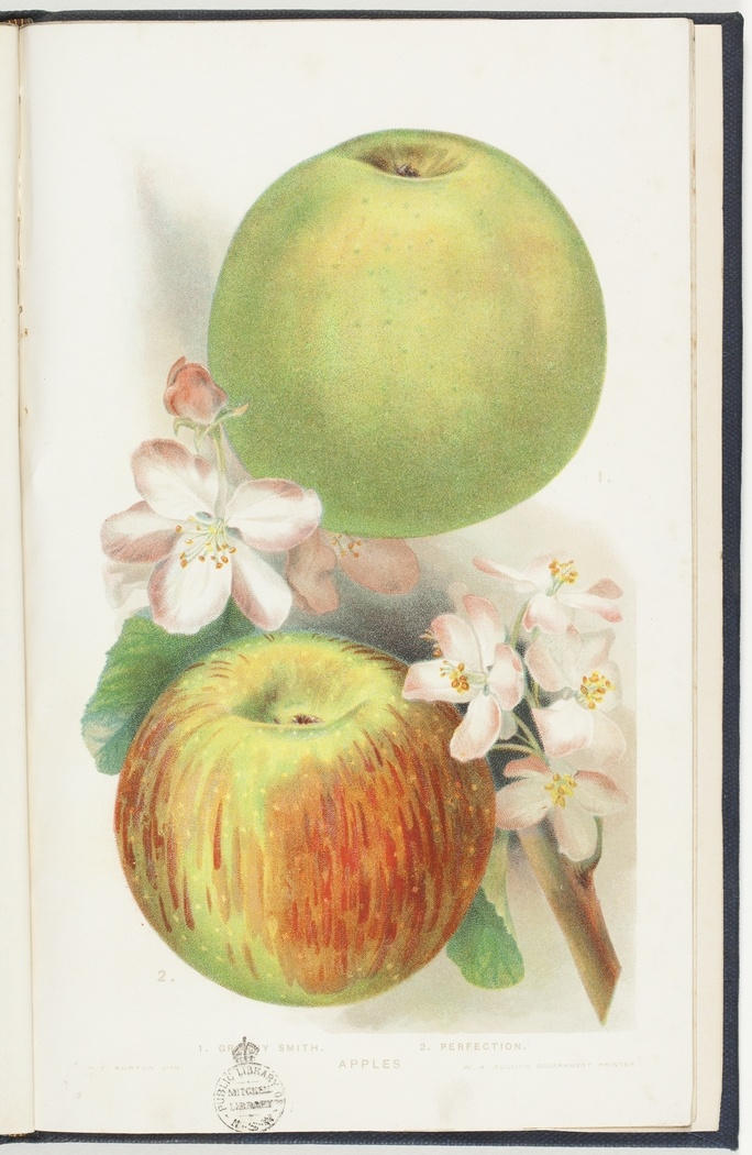 Commercial fruits of New South Wales : Apples, by W. J. Allen. Sydney, 1906.    http://www.sl.nsw.gov.au/discover_collections/history_nation/agriculture/produce/juicy