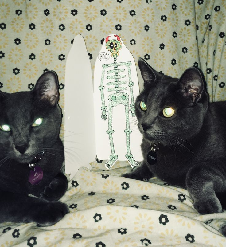Halloween with Russian Blue cats Ike & Tina