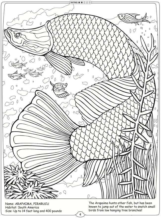 Welcome to Dover Publications River Monsters of the World  Arapaima, Pirarucu