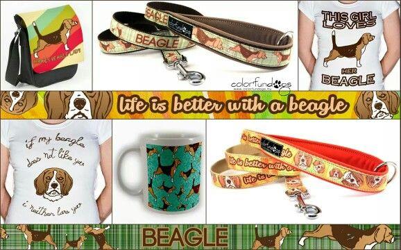 <3 Beagle <3