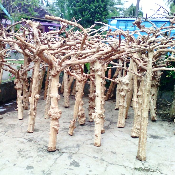 Java wood tree, Java wood tree play stand, Java wood tree for sale, Java wood tree stand, Java wood tree for parots, Parrot stand wood, Java wood parrot play stand, Bird play stand, Bird perch, Java wood perch, Java wood perches, Java wood branches, coffee tree, Java wood bird perches, Java wood bird stand, Java wood parrot stand, Bird shop, Lovebird cage supplier, factory, manufacture from indonesia www.javawoodtree.com