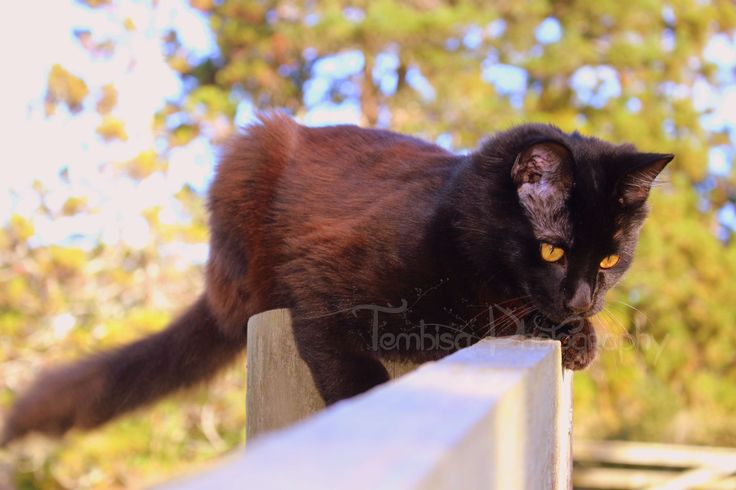 Castiel, our beautiful yellow-eyed boy & the Tembisa Photography mascot.