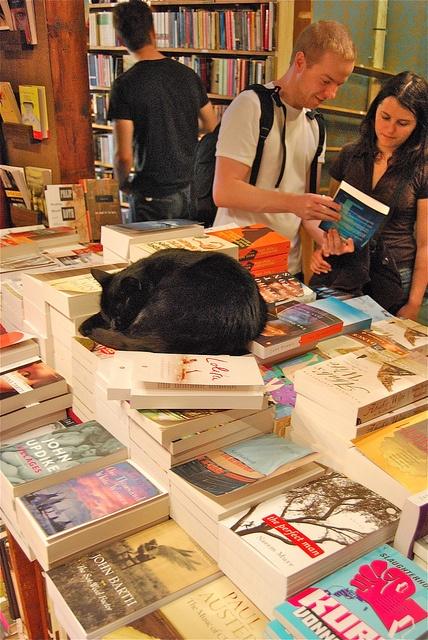un gat a la llibreria
