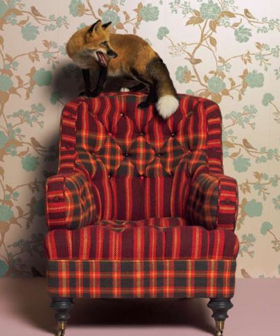 yes please, tartan armchair
