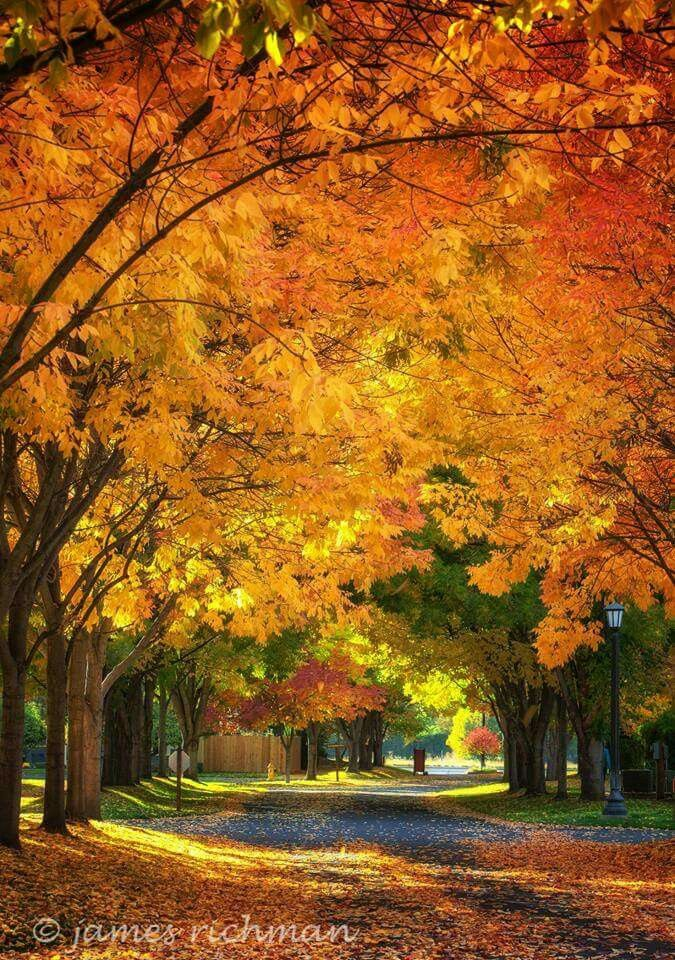 Falling for Autumn inWalla Walla, WA
