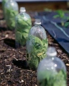 plastic soda bottle cloches