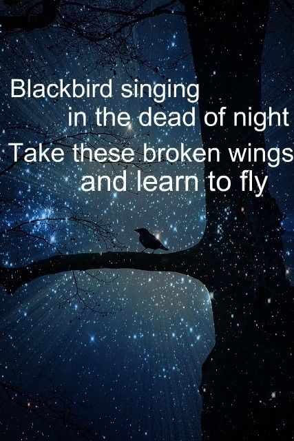 Beatles – Blackbird Lyrics - video dailymotion