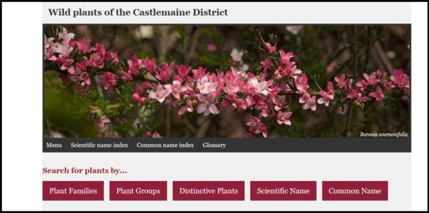 Flora of Castlemaine and surrounds – the online guide is launched! – Connecting Country