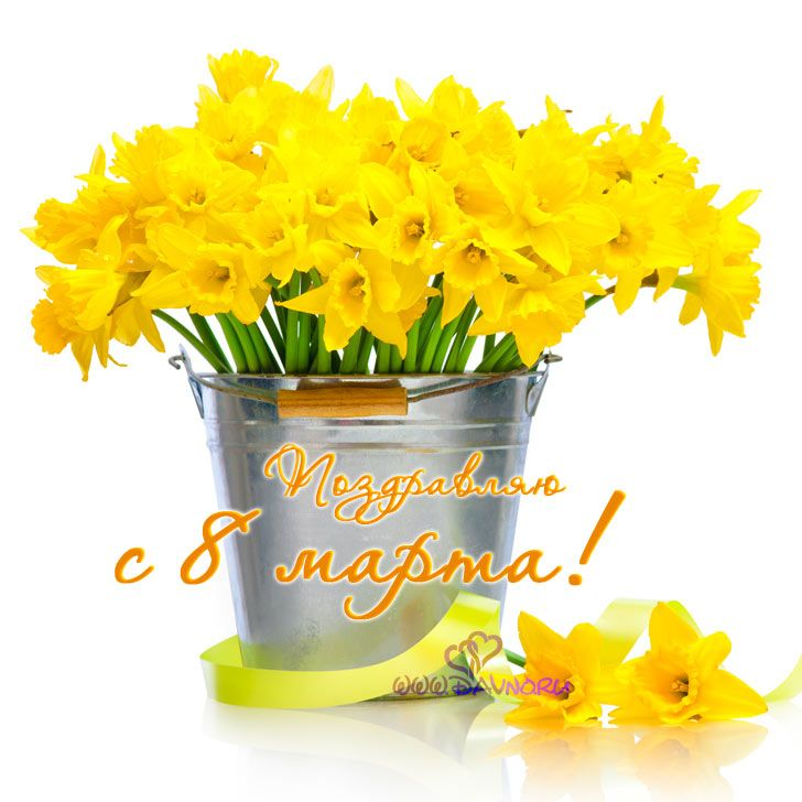 Поздравляю с 8 марта! Желтые нарциссы в ведёрке.