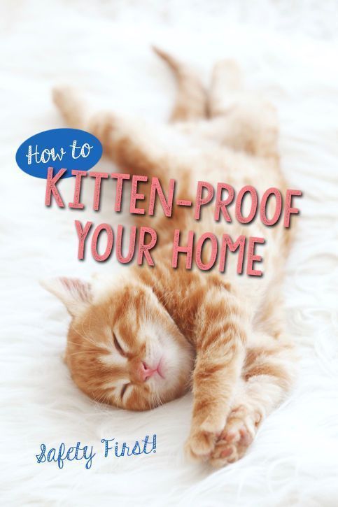 So you're bringing home a new kitten? Congratulations! Kittens are notorious, adorable little trouble-makers, with a knack for getting into things they shouldn't. Their natural curiosity can get them into serious trouble if you don't take a few preventative measures to ensure their safety before they arrive in their new home. Follow along for kitten proofing the different areas of your home that will make their transition a lot smoother – for both of you!