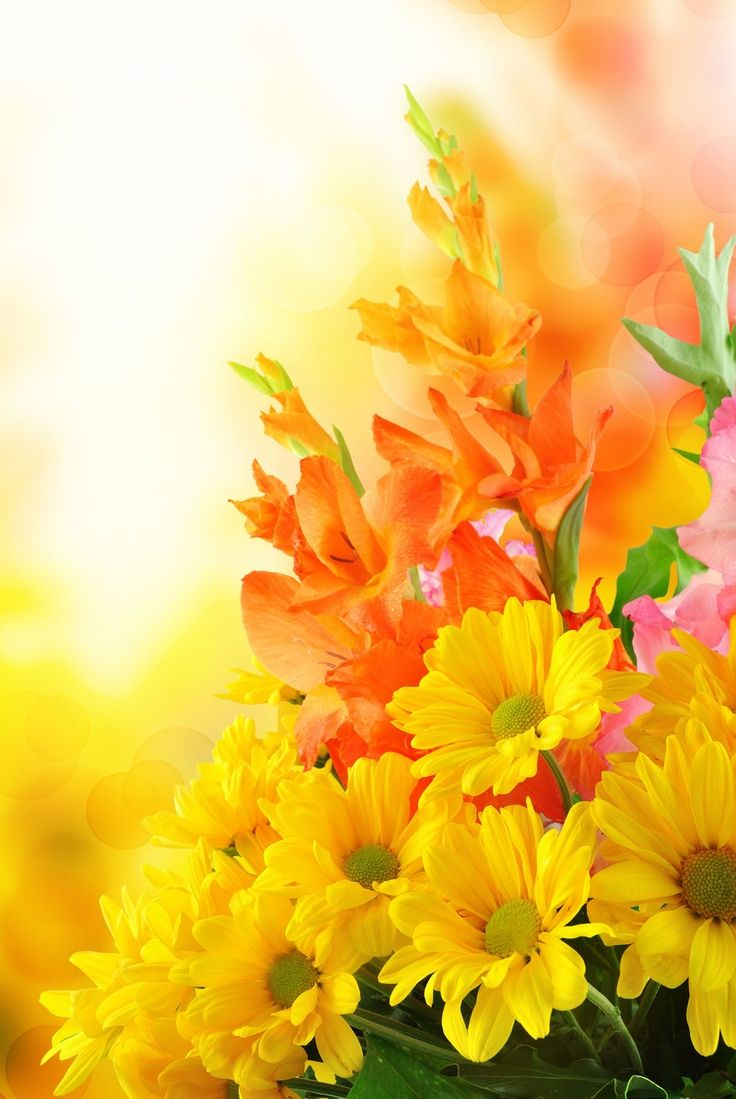 101 best i love yellow flowers images on pinterest yellow flowers beautiful flowers izmirmasajfo