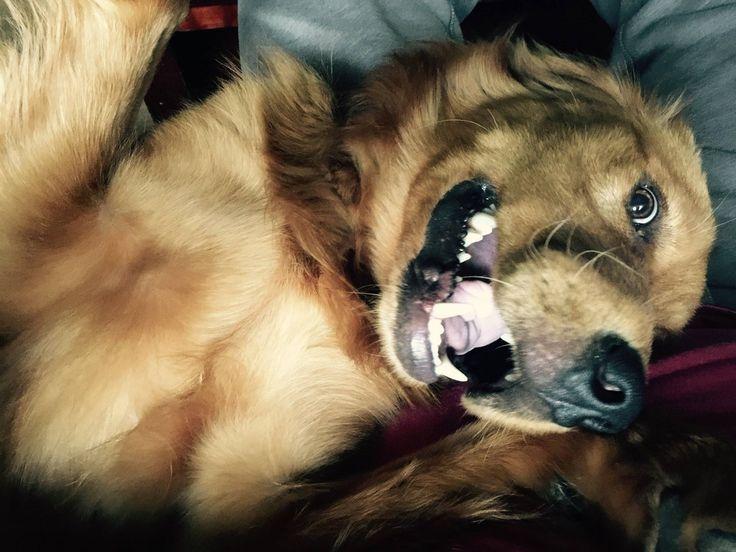 """Gesammelt im Subreddit <a href=""""https://www.reddit.com/r/PuppySmiles"""" target=""""_blank"""">PuppySmiles</a>."""