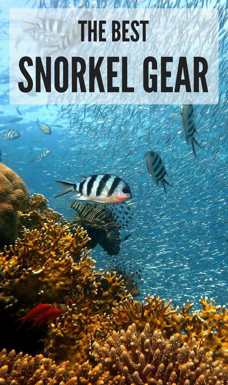 Ultimate Buyer's Guide: The Best Snorkel Gear List. Compare reviews, features and prices, and find the Best Snorkeling Gear for your next diving trip.