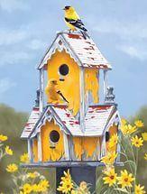Kuş evleri, Kuş yuvaları.