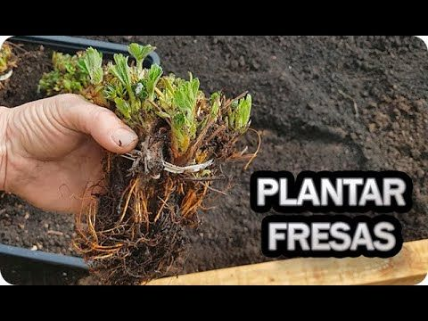Plantar, How To Dry Basil, Tips, Youtube, Food, Gardens, Orchards, Rose Trees, Harvest