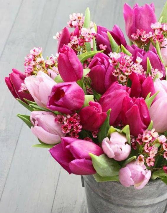 Květomluva říká, že tulipán je symbolem pro věrnost a spolehlivost - ideální květina darovaná z lásky