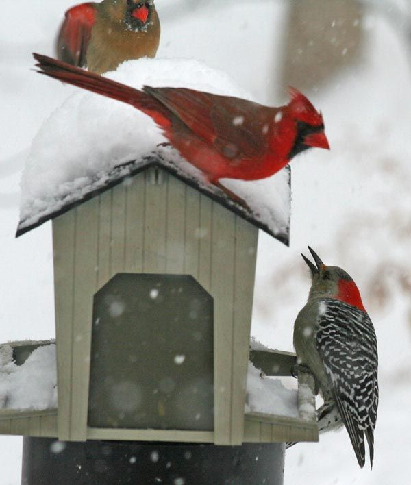 winter birds at the feeders