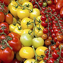 ber ideen zu tomatenpflanzen auf pinterest. Black Bedroom Furniture Sets. Home Design Ideas