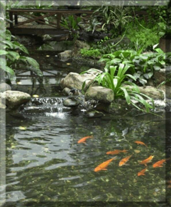 Koi Ponds And Gardens: 54 Best Koi Pond Images On Pinterest