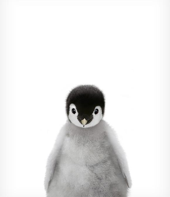 Baby Penguin Printable Art – #animals #Art #Baby #…