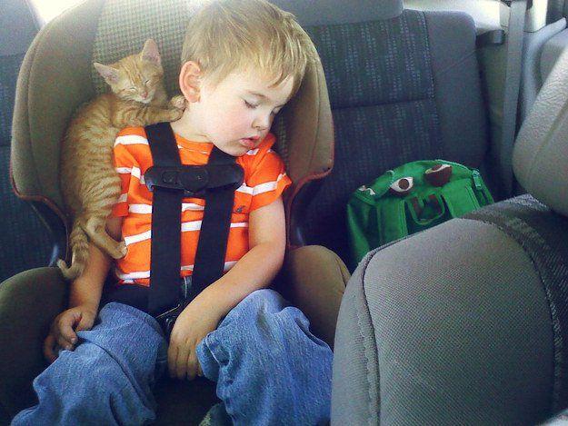 Les chats sont les animaux domestiques les plus appréciés. Du coup, il existe des photos en tous genres de ces petites boules de poiles. Découvrez les 50 meilleures photos de chats de tous les temps ! 1....