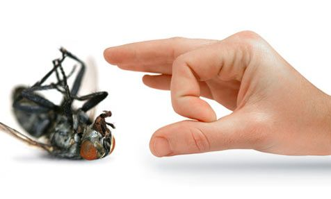 You should always appoint a company for #Pest #Control #Toronto that is having healthy work experience in controlling pest infestation problems.