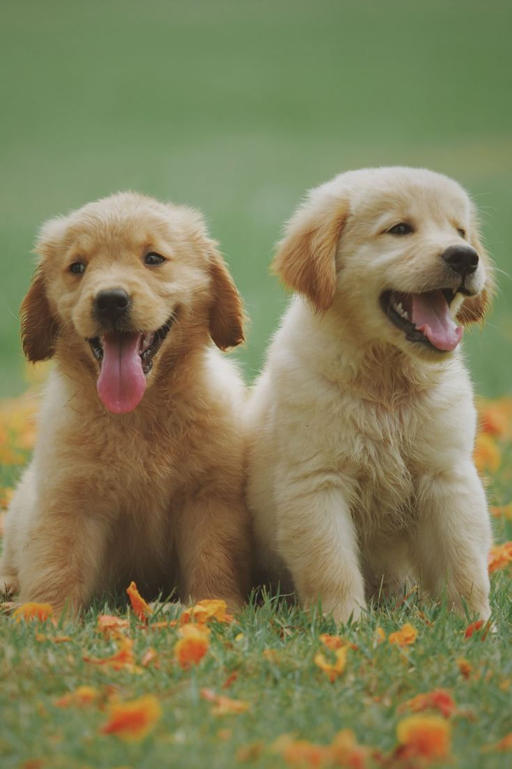 How To Raise A Well Behaved Puppy In This Blog Post I Ll Give